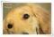 2013.6.11K's Dog Public5