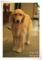 2013.6.11K's Dog Public4