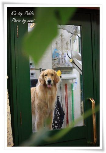 2013.6.11K's Dog Public1