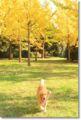 2013.11.17銀杏公園5
