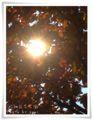 2013.11.18昭和記念7
