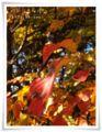 2013.11.18昭和記念6