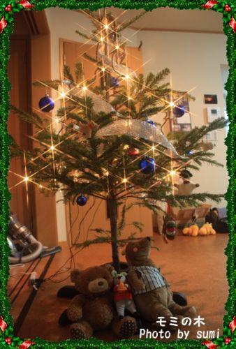 2013.11.25モミの木4
