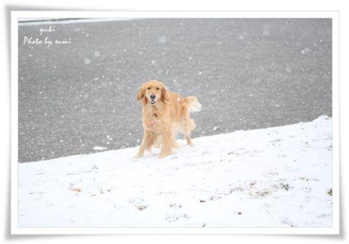 2014.02.08雪1