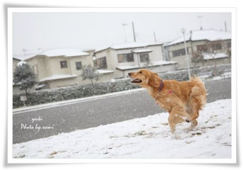 2014.02.08雪4