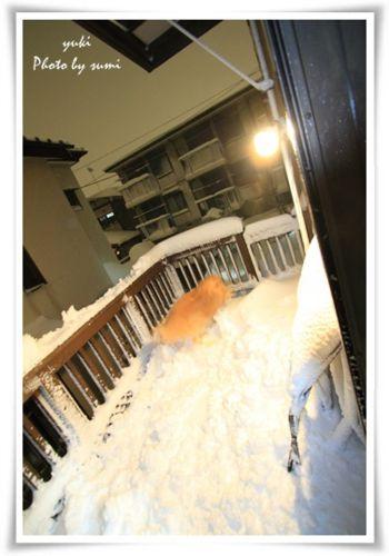 2014.02.08雪6