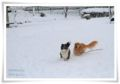 2014.02.09雪6