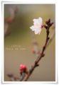 2014.03.10春が来た1