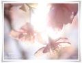 2014.03.10春が来た13
