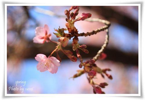 2014.03.10春が来た11