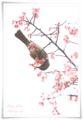 2014.03.19河津桜6
