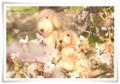 2014.04.05お花見10