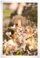 2014.04.05お花見9