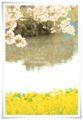 2014.04.05お花見5