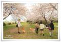 2014.04.05お花見1