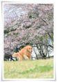 2014.04.06桜1