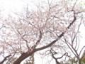 桜@牧野記念庭園