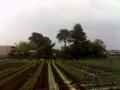 畑&屋敷林