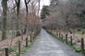 平林寺境内雑木林