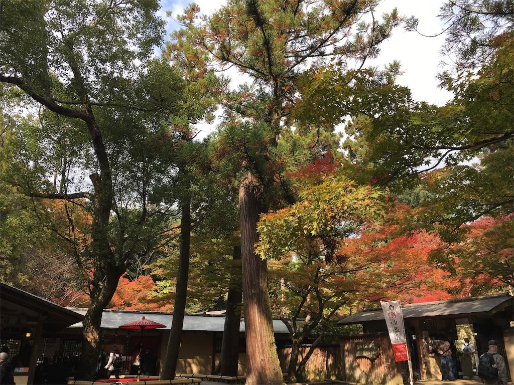 f:id:sumika_morita:20161112201126j:image