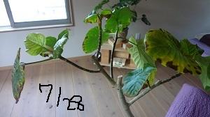 f:id:sumikichi52:20160804193530j:plain