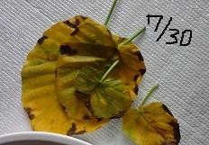 f:id:sumikichi52:20160804193607j:plain