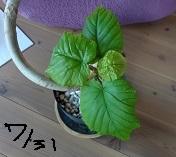 f:id:sumikichi52:20160804193702j:plain