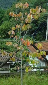 f:id:sumikichi52:20160926180451j:plain