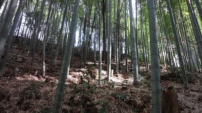 f:id:sumikichi52:20161021121930j:plain
