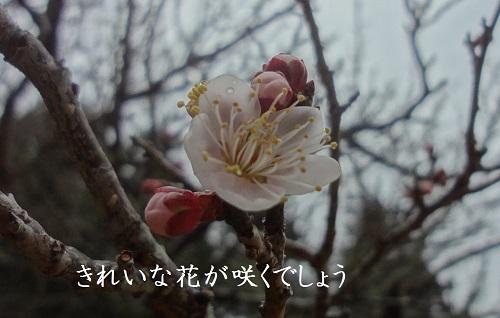 f:id:sumikichi52:20170211175027j:plain