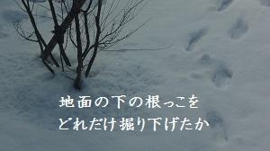 f:id:sumikichi52:20170215233003j:plain
