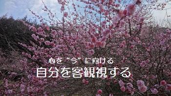 f:id:sumikichi52:20170307220840j:plain