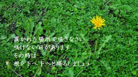 f:id:sumikichi52:20170321122908j:plain
