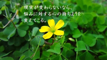 f:id:sumikichi52:20170321122910j:plain