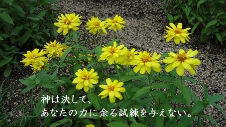 f:id:sumikichi52:20170321122912j:plain