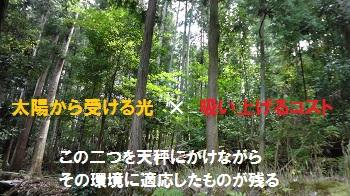 f:id:sumikichi52:20170409145252j:plain