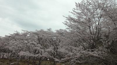 f:id:sumikichi52:20170410193518j:plain