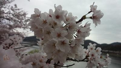 f:id:sumikichi52:20170410193522j:plain