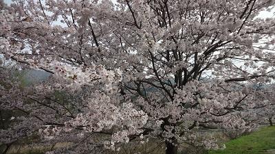 f:id:sumikichi52:20170411195201j:plain