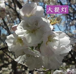 f:id:sumikichi52:20170413195728j:plain