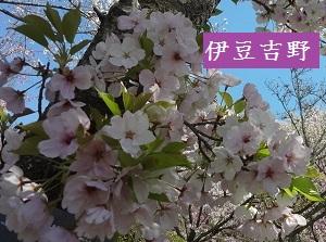 f:id:sumikichi52:20170413195729j:plain