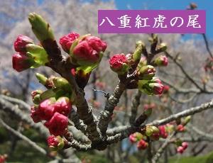 f:id:sumikichi52:20170413195731j:plain