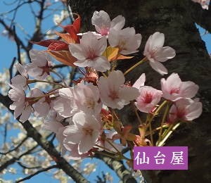 f:id:sumikichi52:20170413195738j:plain