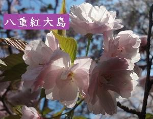 f:id:sumikichi52:20170413195739j:plain