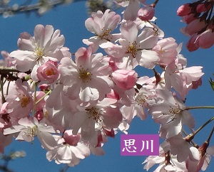 f:id:sumikichi52:20170413195740j:plain