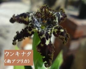 f:id:sumikichi52:20170413195745j:plain