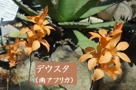 f:id:sumikichi52:20170413195746j:plain