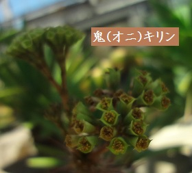 f:id:sumikichi52:20170413195748j:plain