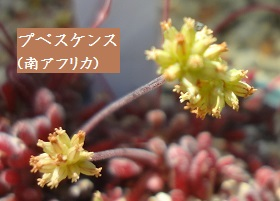 f:id:sumikichi52:20170413195752j:plain