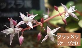 f:id:sumikichi52:20170413195753j:plain